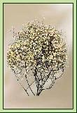 EB023 Einzelblume