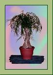TP001 Topfpflanze