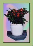TP004 Topfpflanze