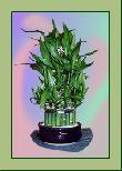 TP005 Topfpflanze