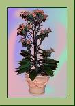 TP009 Topfpflanze