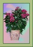 TP011 Topfpflanze