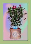TP014 Topfpflanze