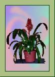 TP019 Topfpflanze